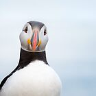 Atlantic Puffin Portrait by George Wheelhouse