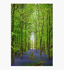 Bluebell Cathedral Photographic Print
