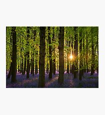 Low Sun in the Bluebell Wood Photographic Print