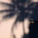 Palm shadow against a wall by Richard McCaig