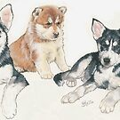 Siberian Husky Puppies by BarbBarcikKeith