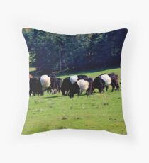 Belted Galloways Throw Pillow