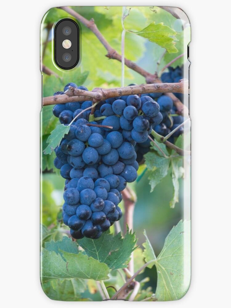 grape and vineyard by spetenfia