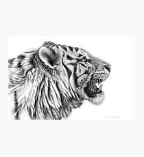 White Tiger profile G01 by schukina Photographic Print
