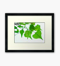 heart shaped tree leaves Framed Print