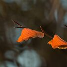 Beech Leaves by Sue Robinson