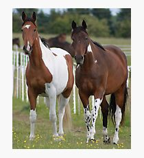Coloured Horses Photographic Print