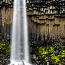 Svartifoss by Randy  LeMoine