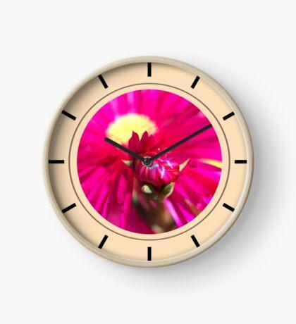 Hot Pink Ice Plant/Pigface Flower Clock