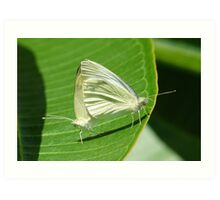 Procreation ... Butterfly Style Art Print