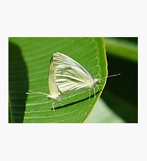 Procreation ... Butterfly Style Photographic Print