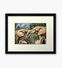 Elephant Fight Framed Print