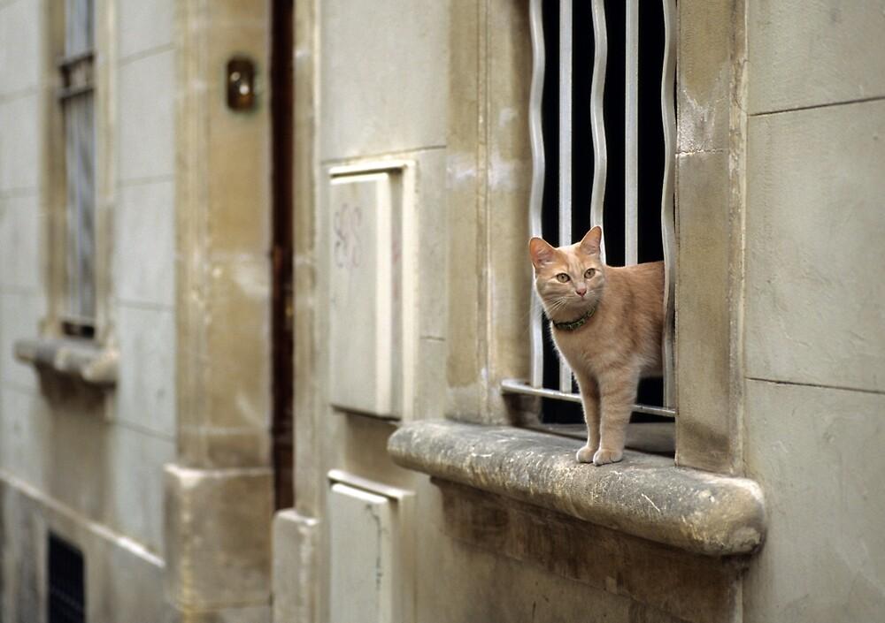 Ginger Cat - Arles, France by Kasia Nowak