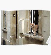 Ginger Cat - Arles, France Poster