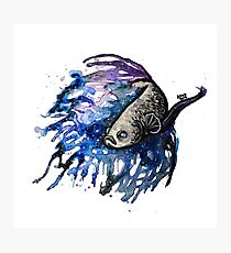 Galaxy Betta Fish  Photographic Print