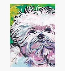 Maltese Dog Bright colorful pop dog art Photographic Print