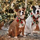 A Bubba and Kensie Christmas - No Text by Shelley Neff