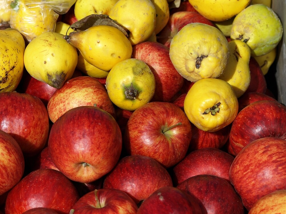 Apples and Quinces  by Tom McDonnell