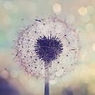 JULY WISH by Bloom by Sam Wales
