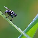 the fly by Manon Boily