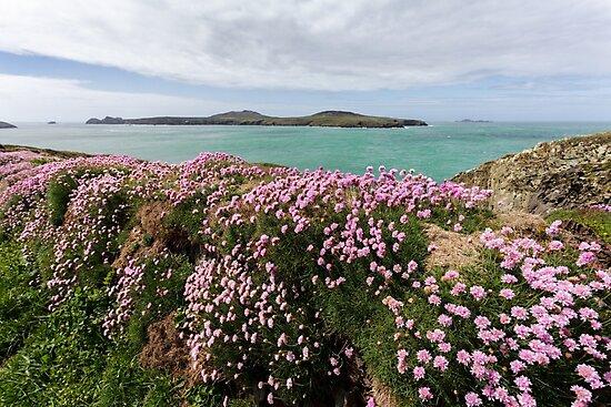 Spring Views across to Ramsey Island, Pembrokeshire by Heidi Stewart