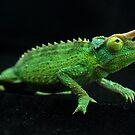 Jackson's Chameleon by Alan Brazzel
