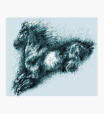 Wild Horse Photographic Print