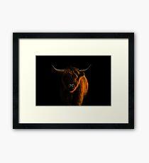 Lowlight Highland Cattle Framed Print