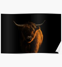 Lowlight Highland Cattle Poster