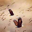 Adler und Möwen von Peggy Collins
