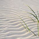 Ripples In The Sand by Sharon Woerner