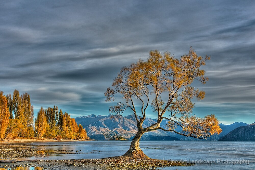 Quot The Lone Tree Lake Wanaka Quot By Images Abound Neil