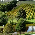 Grapevines Tasmania by Christina Backus