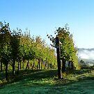 Tasmanian Vineyard by Christina Backus