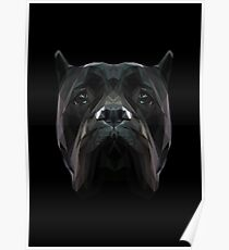 Cane Corso dog. Poster