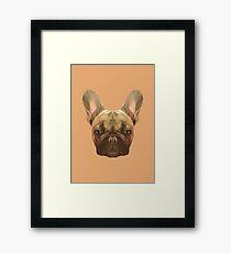 French bulldog. Framed Print