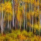 Autumn Trees by Peter Hammer