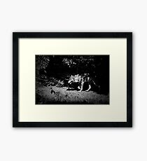 European grey wolf walking through the forest. Black and white moody photo Framed Print