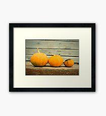 Pumpkins on a wooden background Framed Print