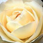 Not just a rose by Karen Tregoning