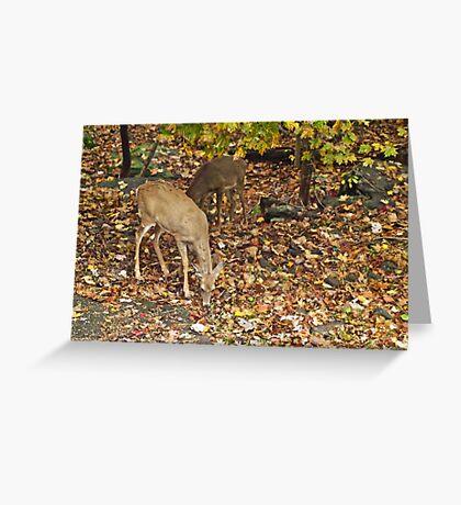 Young Whitetail Deer - Odocoileus virginianus - Autumn Greeting Card
