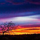 Sunrise Art 4Redmond by Richard Bozarth