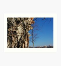 River Birch Bark up against the blues Art Print