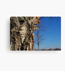 River Birch Bark up against the blues Canvas Print