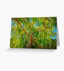 Colour of Life, Yanchep National Park Greeting Card