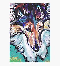 Sheltie Shetland Sheepdog Bright colorful pop dog art Photographic Print