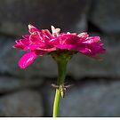 Pink flower by MariaNikelova