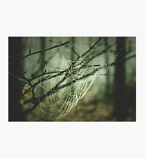 Spider's web. Hipster, vintage colors. Dark green forest Photographic Print