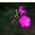 Tiny flowers by MariaNikelova