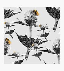 Yellow bumblebee on a black and white thistle Photographic Print